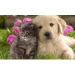 Animali, prodotti naturali per cani e gatti