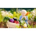 Alimentazione biologica naturale