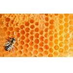 Cosmetica Naturale Biologica | Bio Shop Online